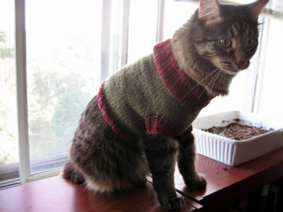 Katsweater.jpg