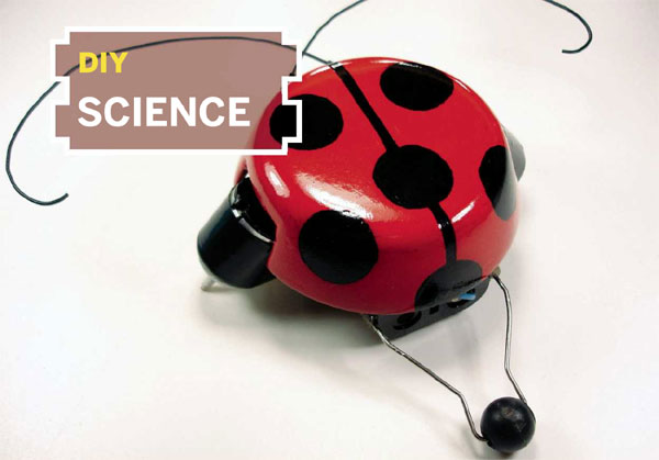 beetleBot-1.jpg