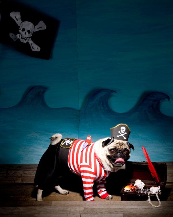pug-pirate-opener.jpg