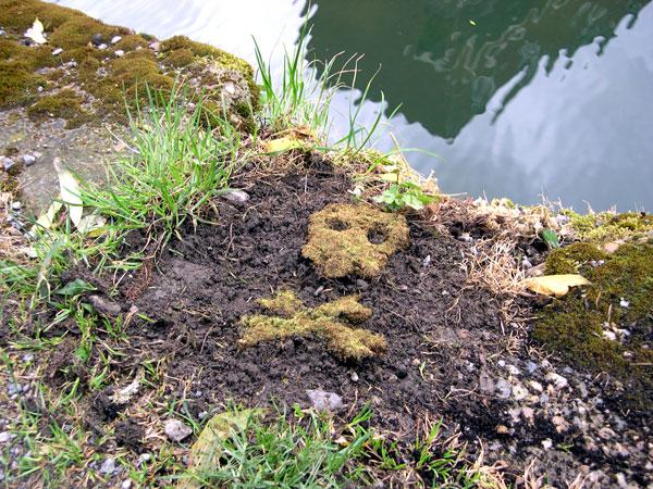 moss-graffiti_opener.jpg