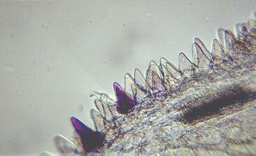 glass_sphere_microscope_image01.jpg