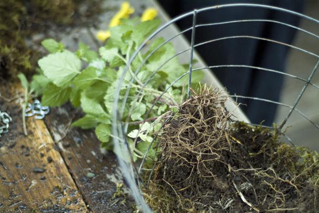 hanging_planter_0007.jpg