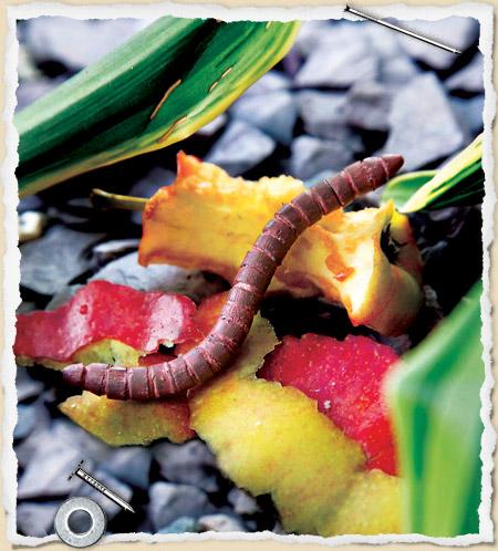 pencil-worm.jpg