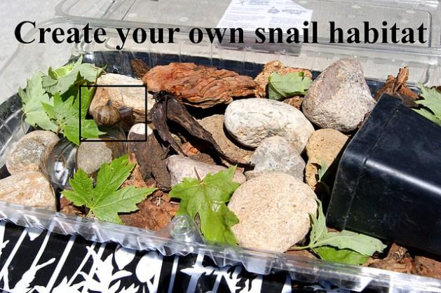 snail_habitat.jpg