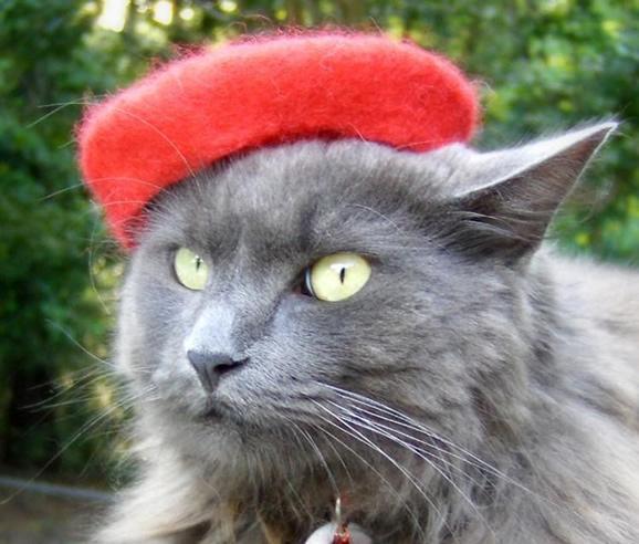 cat_beret_red.jpg