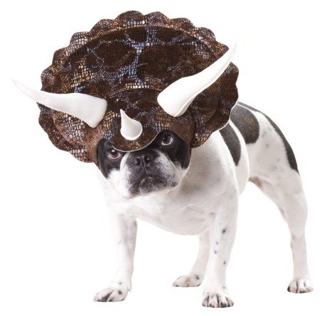 triceratops-dog-of cuteness.jpg