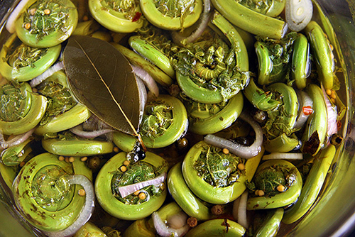 Marinating-Fiddleheads-800.jpg