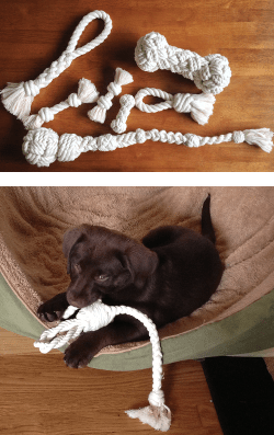 dogs_toys_and_maggie