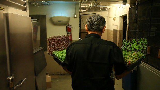 Delivery of the micro greens throughout the Bay Area.