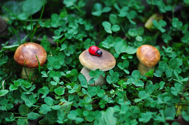 05_Papier-Mache_mushrooms_flickr_roundup