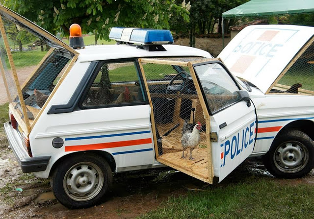 police-car-chicken-coop-1