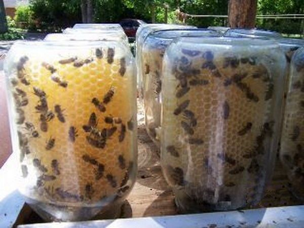 mason-jar-beehives-1