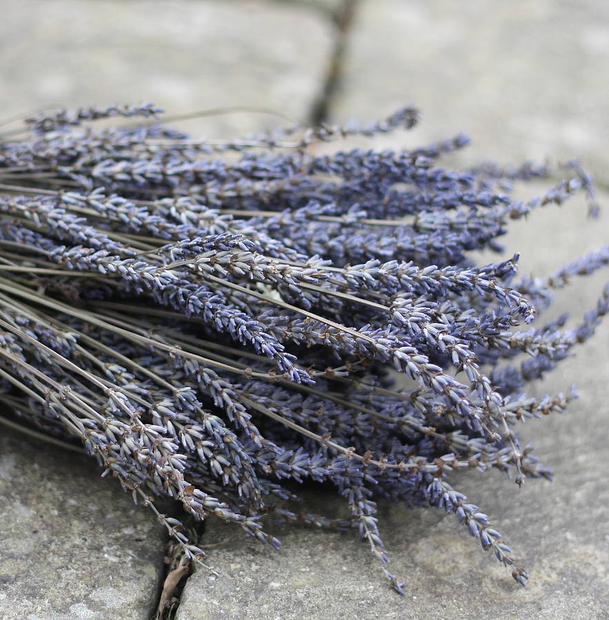 Famed Dried Lavender Bunch Dried Lavender By Wedding Potpourri Bunch Cooking How To Dry Lavender My Dreams How To Dry Lavender houzz-03 How To Dry Lavender