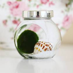 Small Crop Of Marimo Moss Ball