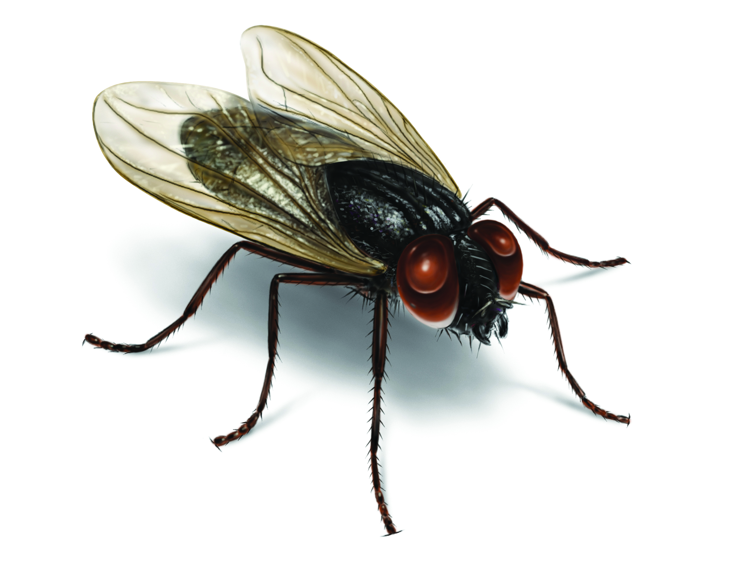 Decent How Did I Get House House Fly Control Get Rid House Flies Small Flies House All House Plant Soil Small Flies A Sudden Uk houzz-02 Small Flies In House