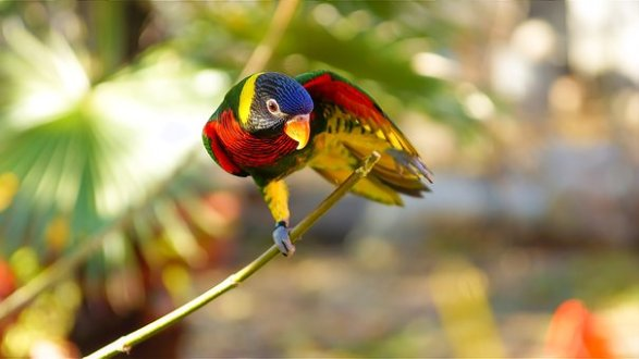 Papağan, Kuş, Geçiş Yumuşatma, Renkli
