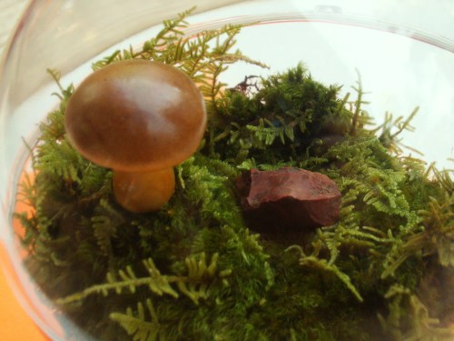 Artistic Terrarium Mushrooms Fairy Garden Decor Crafts Brown Pack Mushroom Fairy Garden House Mushroom Fairy Garden