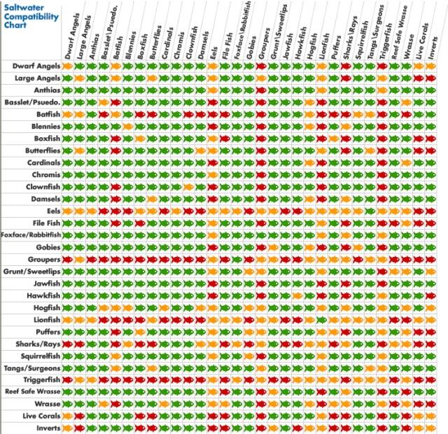 Compatibility Chart ? www.YourFishStore.com