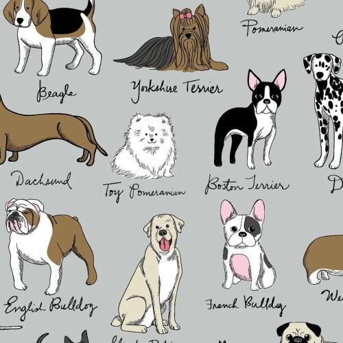 Medium Of French Dog Breeds