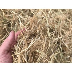 Small Crop Of Straw Vs Hay