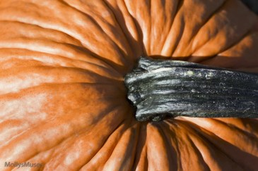 Country Pumpkin Photo