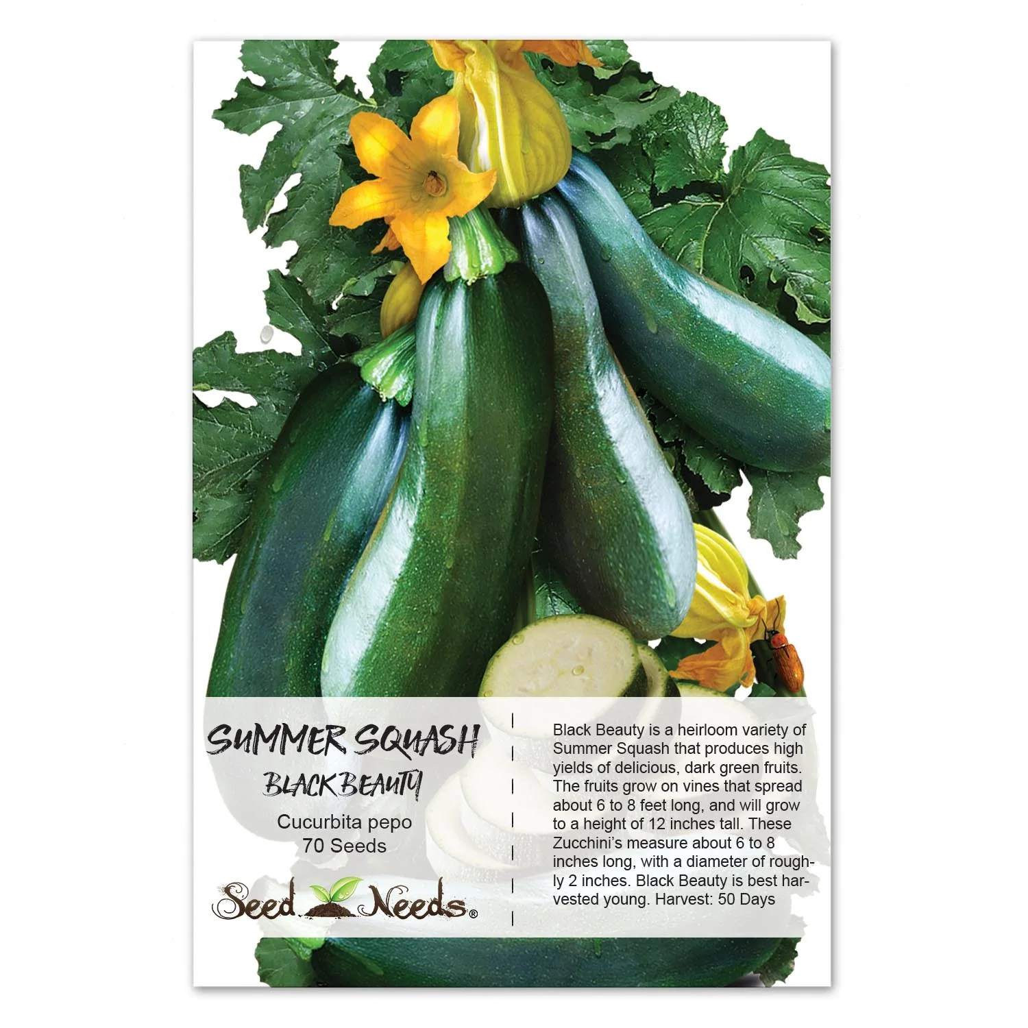 State Black Beauty Zucchini Squash Black Beauty Summer Squash Seed Needs Zucchini Vs Cucumber Nutrition Data Zucchini Vs Cucumber Which Is Healthier houzz 01 Zucchini Vs Cucumber