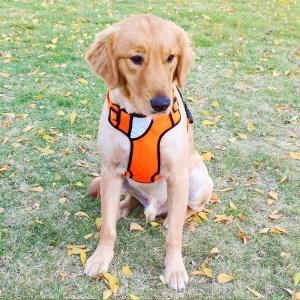 Pristine Laryngeal Paralysis Harness Petninja Choice Front Range Dog Harness Petninja Choice Front Range Dog Harness Pet Ninja Shop Harness Dogs Dogs That Pull