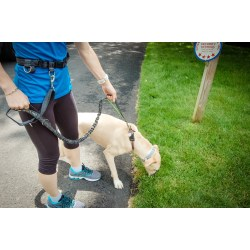 Small Crop Of Hands Free Dog Leash