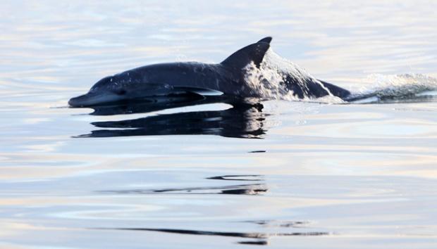 Lewat Suara, Lumba-lumba Bisa Pecahkan Masalah Bersama