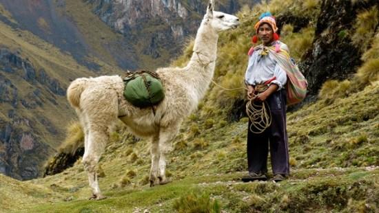 Image result for peru llama