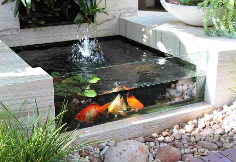 Large Of Indoor Koi Pond