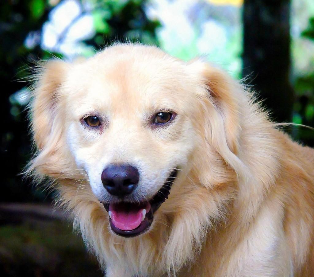 Sweet Pixabay Boy Dog Names Because Fido Is Getting Most Dog Names Dog Names Reddit bark post Clever Dog Names