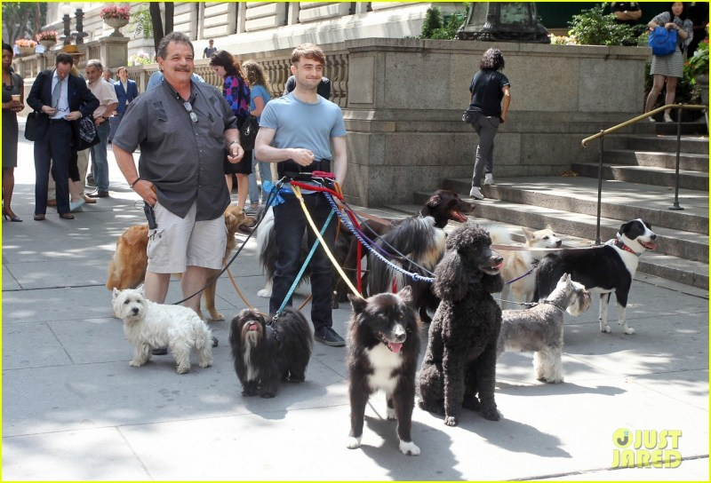 Large Of Daniel Radcliffe Dogs