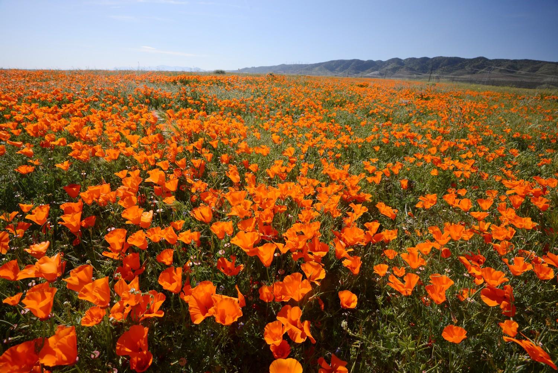 Antelope Valley, Lancaster, CA