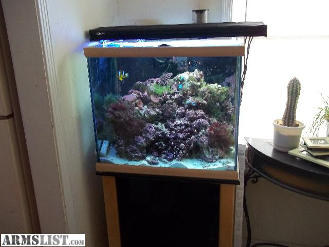 ARMSLIST   For Trade: 40 Gallon Saltwater fish tank