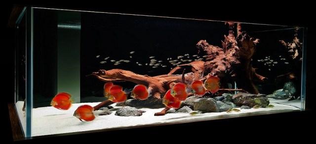 Aquarium filter Online|Aquarium Shop Sydney|Fish Tank Maintenance