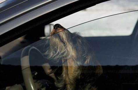 break-car-windows-rescue-dogs-heat-florida-law-6