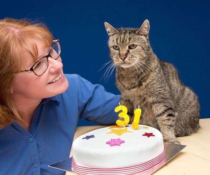 31-year-old-cat-nutmeg-10-2