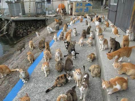 cat-island-japan-tweet-food-donation-aoshima-10