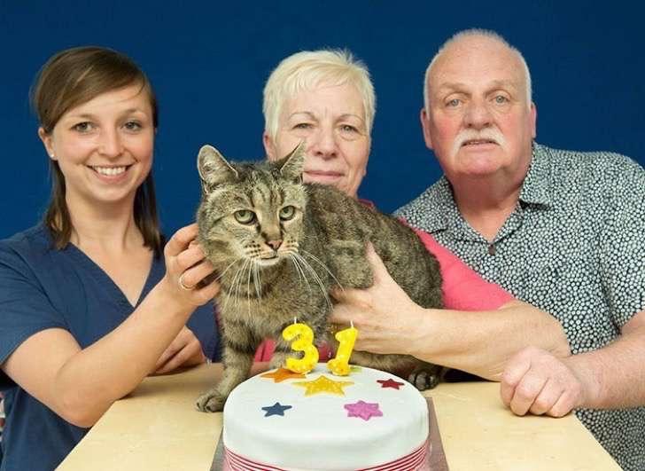 31-year-old-cat-nutmeg-8-2