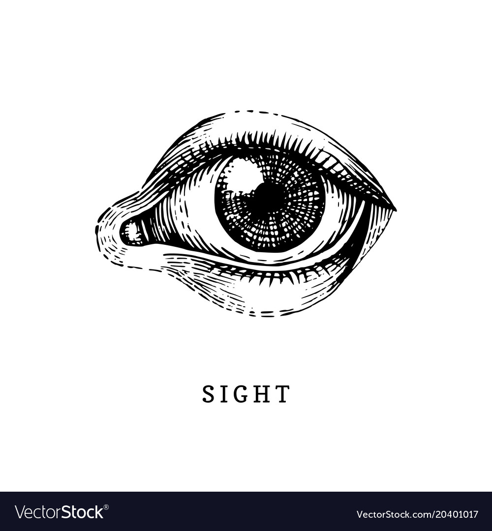 Fullsize Of Sense Of Sight