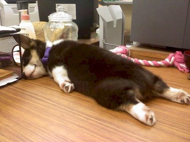 perros durmiendo de forma graciosa 1