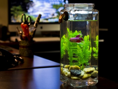 Home / NoClean Aquariums: Self Clean Aquarium