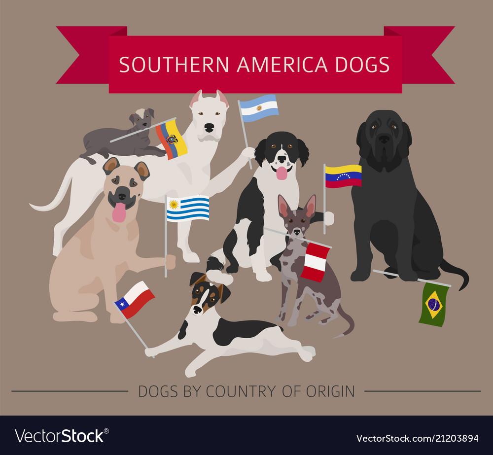 Peachy Dogs By Country Origin Latin American Dog Vector 21203894 Little Dog Latin Latin Dog Names bark post Dog In Latin
