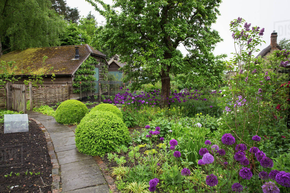 Beautiful Flowerbed Flowerbed Purple Flowers And View Plant Beddivided By Tree Shrubs Cottage Garden Shrubs View Purple Flowers Garden houzz-03 Purple Flowering Tree