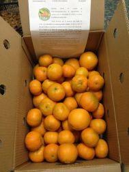 Naranjas Palau