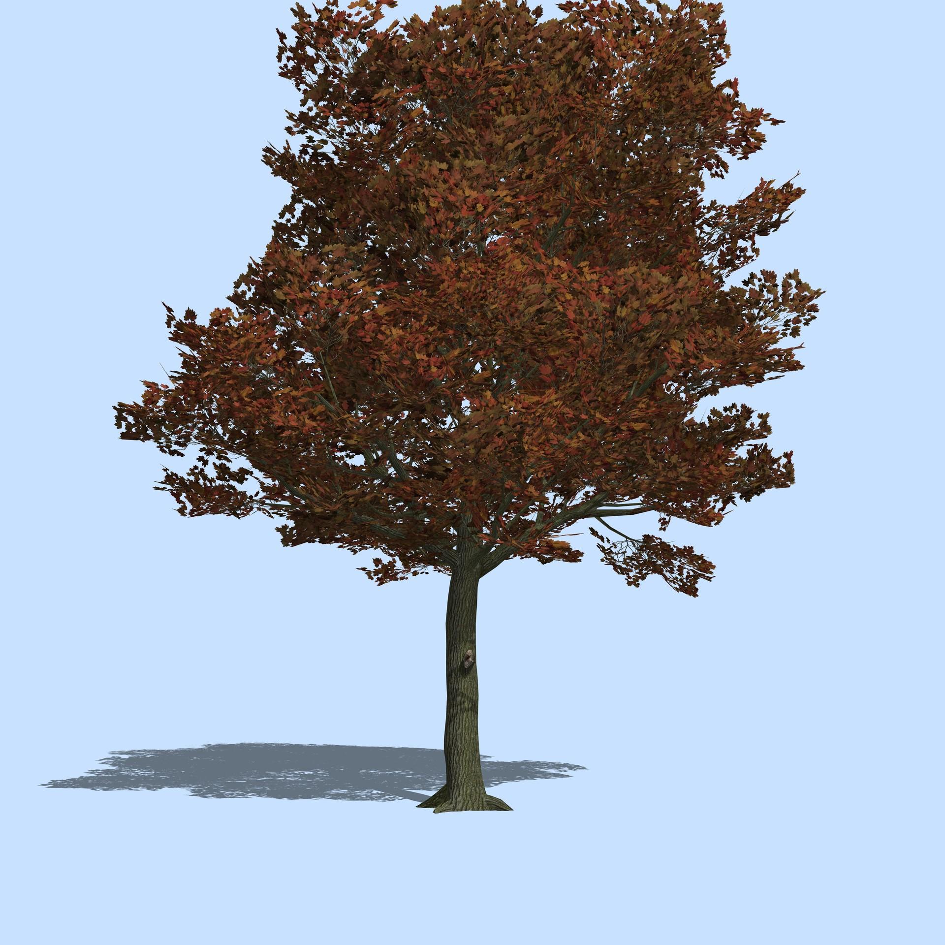 Prissy Autumn Season Blue Mountain Maple Tree Blue Maple Tree Wiki Quentin Grenot St Quentin Grenot Maple Tree houzz 01 Blue Maple Tree