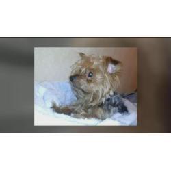 Small Crop Of Houston Craigslist Pets