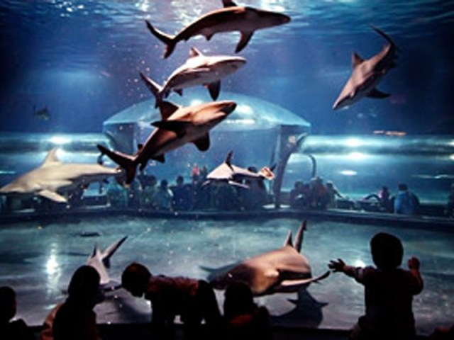 freshwater aquarium oklahoma city attractions things to do in oklahoma