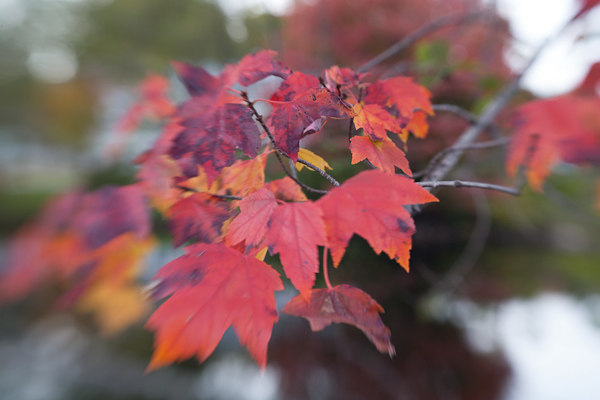 Tutorial: Editing Fall Foliage Photos (4/6)